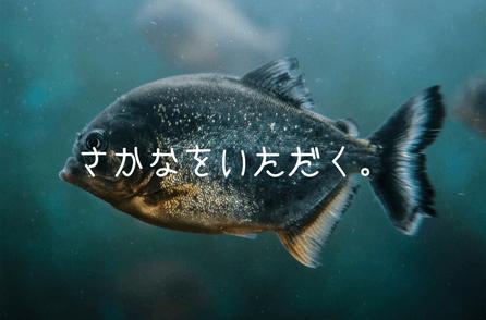 魚を魚で食える魚がこの世で一番おいしい魚ってことで間違いない?