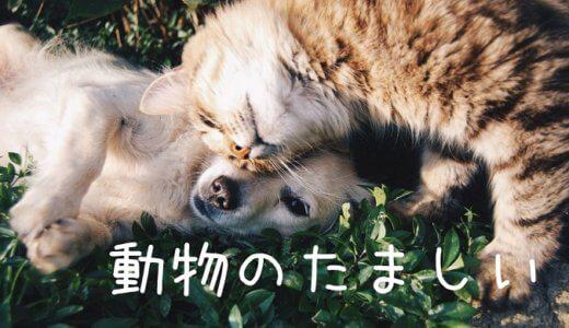 ペットの生まれ変わりはある?動物の魂、仕組み、実例や再会について